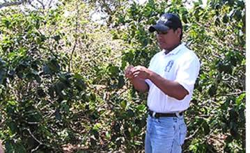 Kaffeplantageturer i Boquete med Café Ruiz